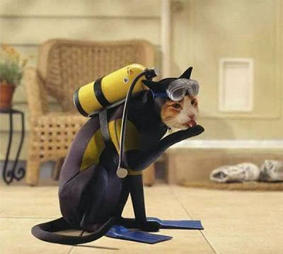 Funny cat in a diving wet suit costume image
