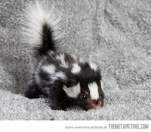 Baby skunks deserve more appreciation…