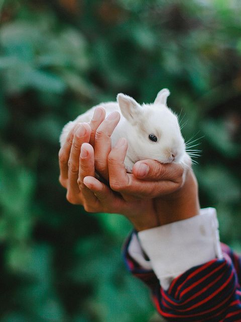 {hold a baby bunny = everything will be better}