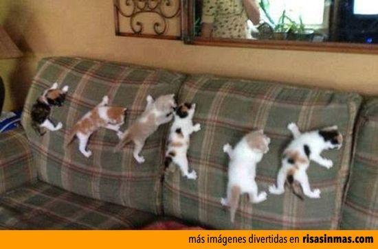 Gatitos entrenando • brilliant funny kitten #shakira she wolf #james lafferty funny #funny pacquiao photos #funny drunk photos