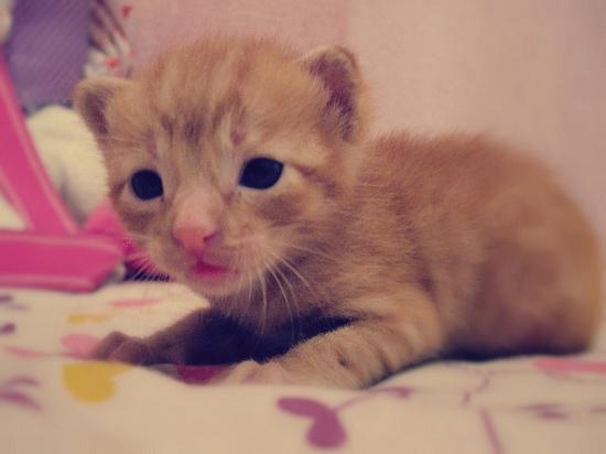 baby cat *-*