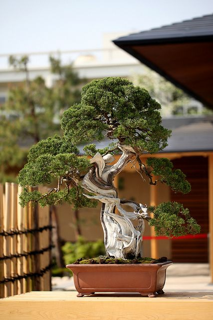 The Omiya Bonsai Art Museum #1