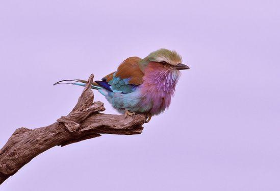 wow bird