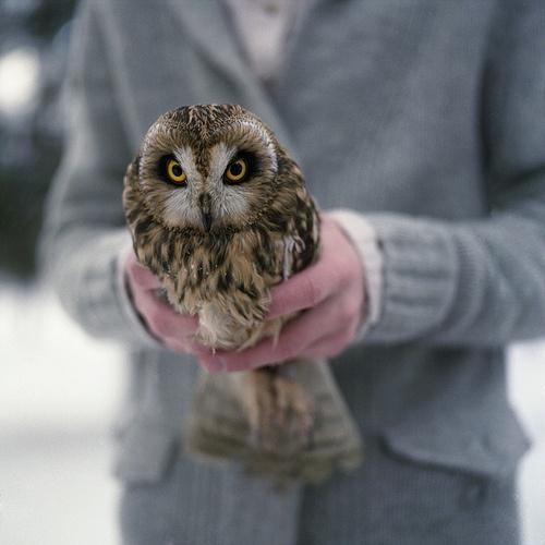 Owl by Anastasia Glebova