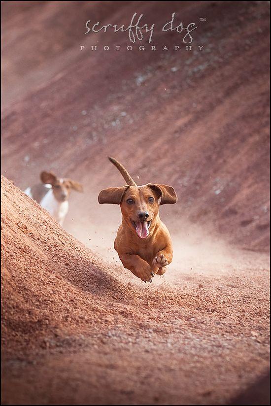 Wiener Dog Races!