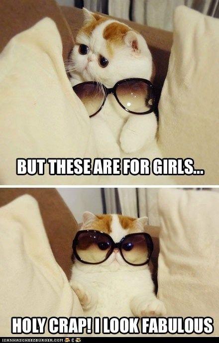 this. cat.