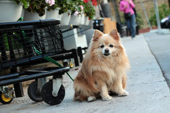 12 Ways to protect yourself against pet theft