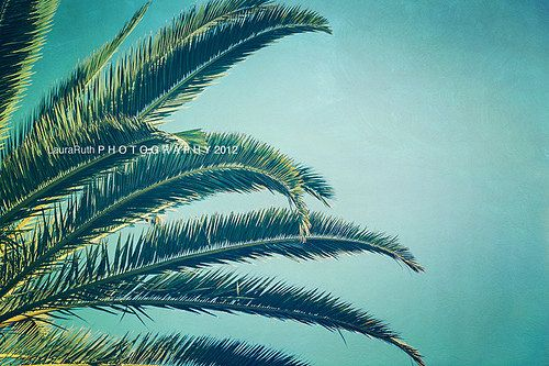 Beach Photography Travel Photo Palm Trees Home by DreamyPhoto