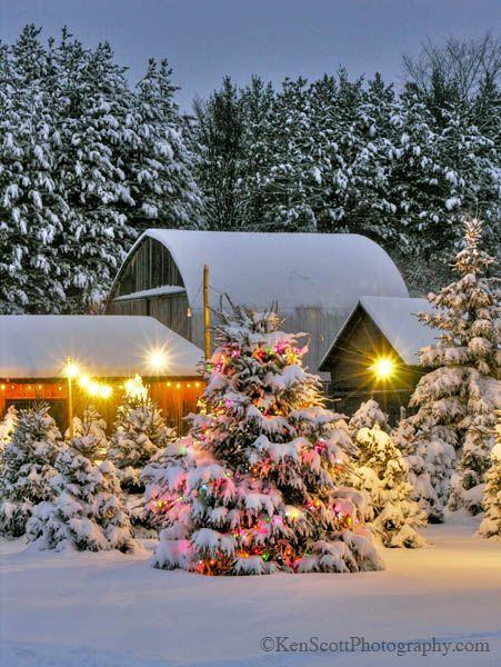 Christmas Tree Farm, Michigan