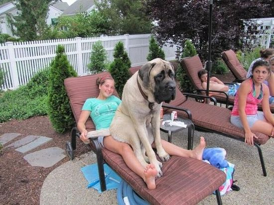 21 Dogs Who Don't Realize How Big They Are! Too cute for words!! SQUEE!
