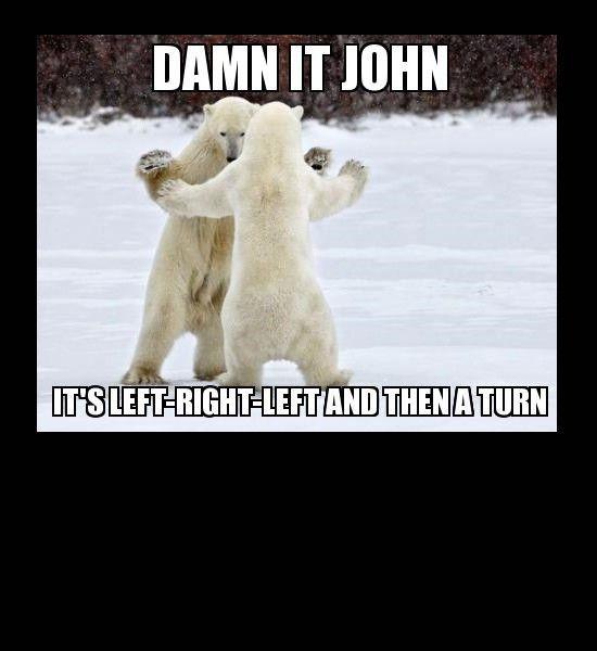 bear dancing, funny photos