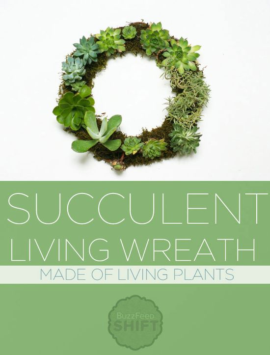 This wreath is made of actual living plants! And not a pine needle to be found.