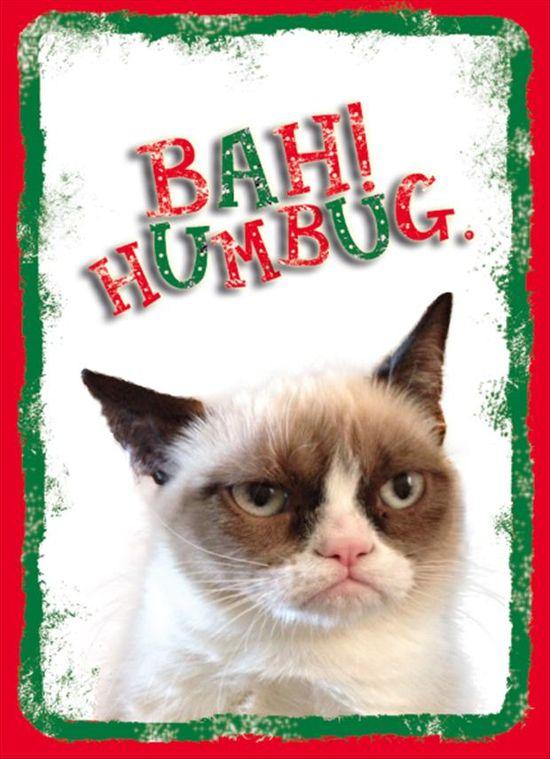 I love tard the grumpy cat.