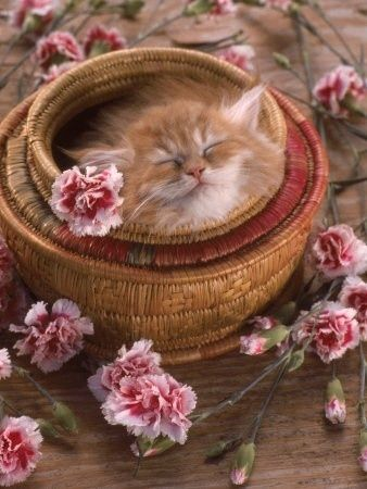 basket cutie...too cute, put a smile on my face.