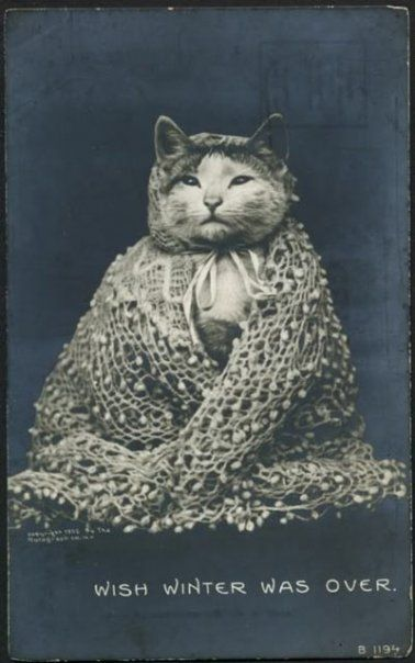 I hear you adorably attired vintage kitty, I hear you. #cute #vintage #pets #cat #kitty #winter #portrait