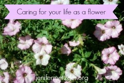 Jenifer Metzger - Sweet Blessings: Beautiful Flower