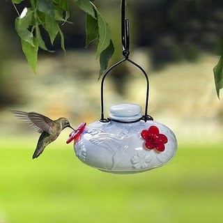 Click for homemade hummingbird nectar recipe... so easy, cheap, and they love it.