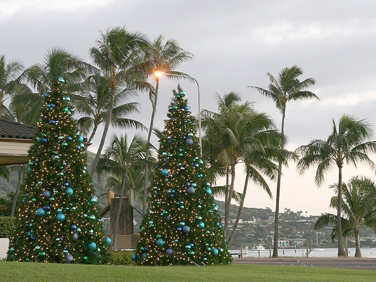 Christmas Trees by the Beach....