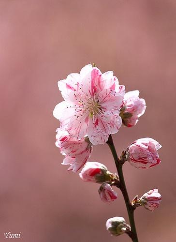 ???.  Pink
