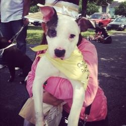 Sage 108575 is an adoptable Pit Bull Terrier Dog in Newark, NJ. Sage is a sweet and very affectionate puppy. She prances along side you on lead. Always looking up at you to make sure you are with her....