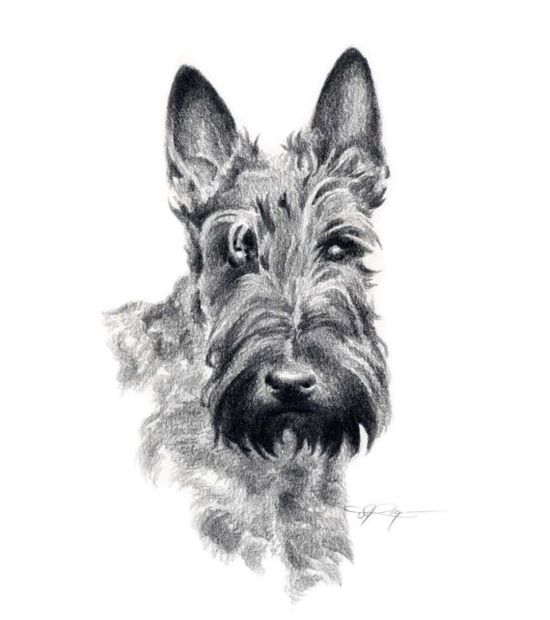 SCOTTISH TERRIER Dog Pencil Drawing ART Print by k9artgallery,