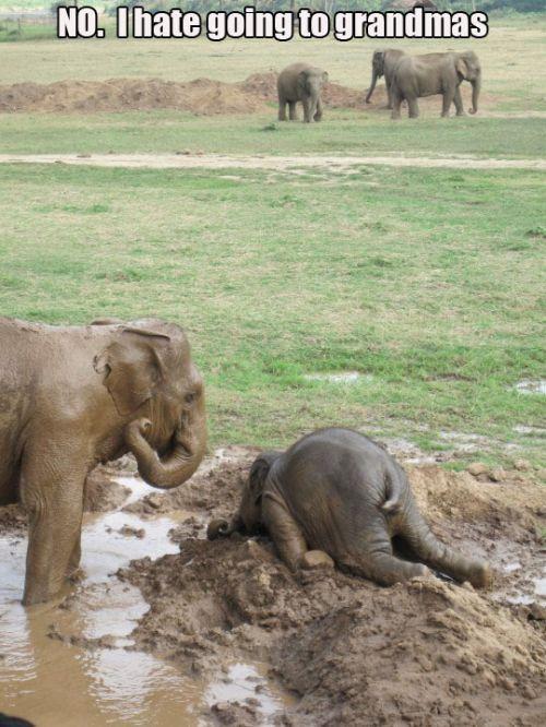 love elephants! Hahahaha
