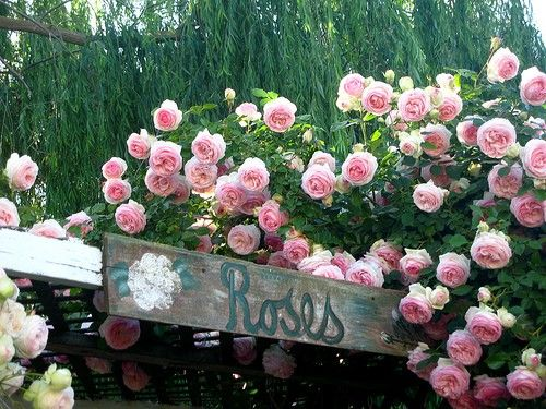 English Roses - dolcechic.etsy.com & candacerose.artfi.... I want to have this in my garden.