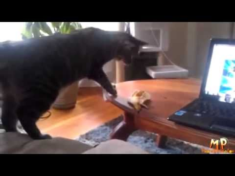 Funny cats again Pets delight their owners
