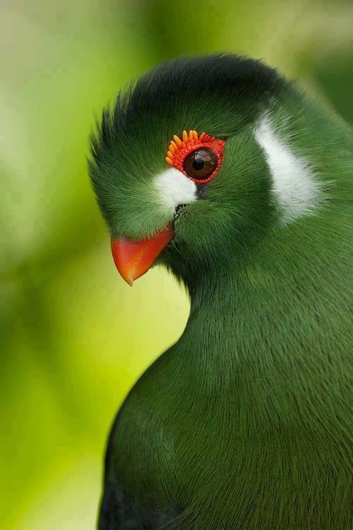 Pretty bird.