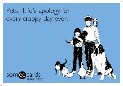 Pets. Life's apology for every crappy day ever.