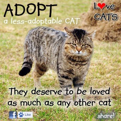 """Special-needs pets are just as wonderful and loving as """"normal"""" pets, and they're just as deserving of forever homes.  Adopt-A-Less-Adoptable-Pet Week campaign. www.petfinder.com..."""