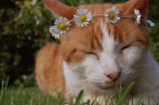 She wore flowers in her fur... ? #kitty #cat #cute #pets #animals