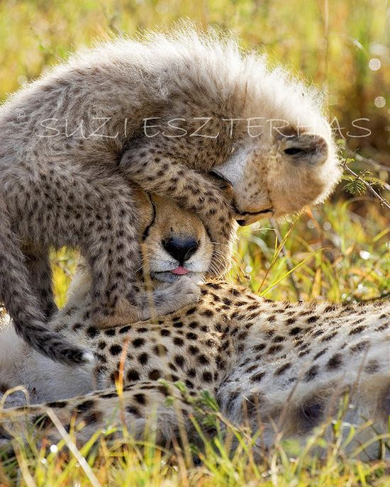 SAFARI BABY ANIMALS  Set of Four Photos  Size 8 X 10 by WildBabies, $40.00