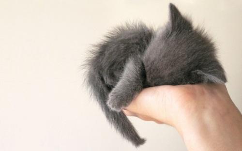 . I love baby animals