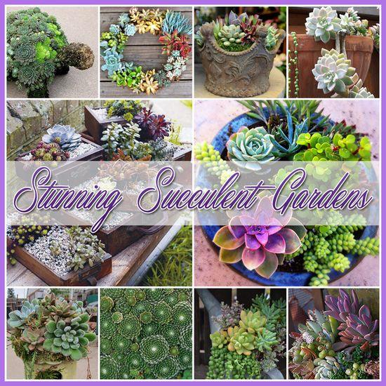 Stunning Succulent Gardens