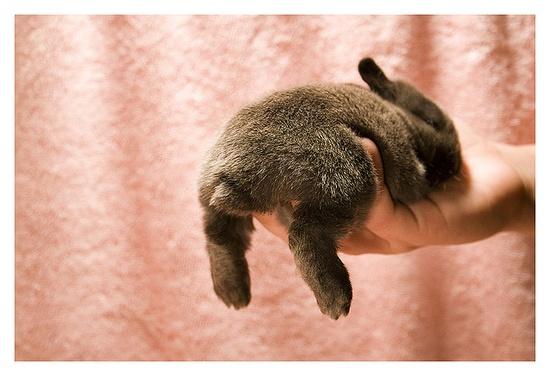 I want a bunny..
