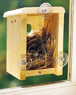 Window Bird House.