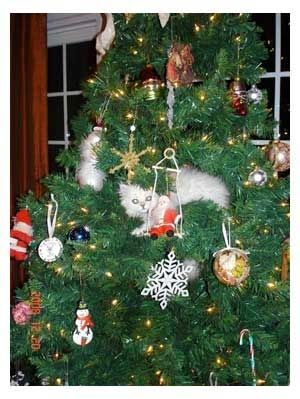 Find the kitty! #cat #quotes #cats #funny #humor #cute #lolcats #meme =^..^= www.zazzle.com/...