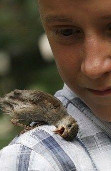 Cute Pet Baby Sparrow On Little Boy's Shoulder