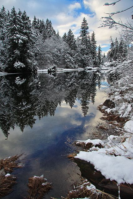 A serene winter moment captured in Silver Lake Provincial Park, British Columbia