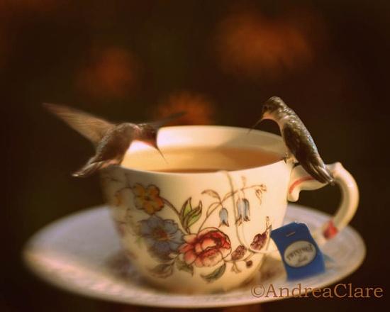 Hummingbirds Having Tea