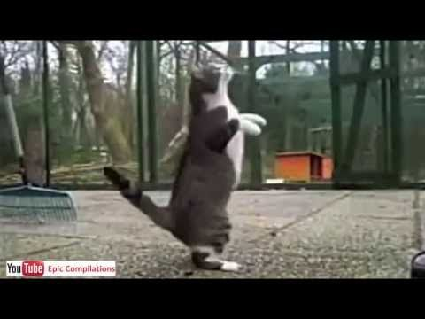 Cats Compilation - 1 hour of funny cats in HD!