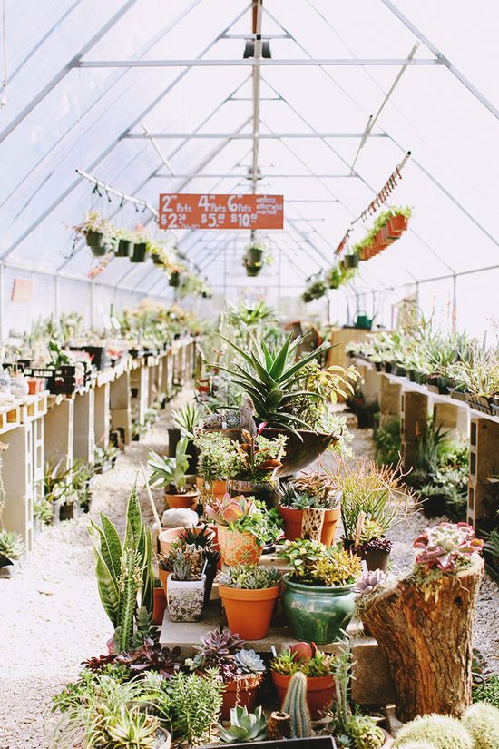 A glorious garden center.