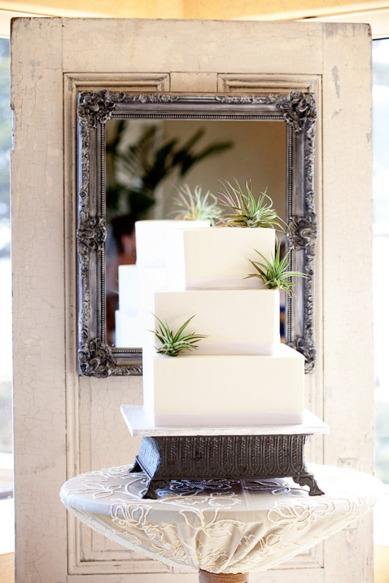 modern meets the beach with this air plant infused cake by www.butterybakery...  Photography by gillettphoto.com