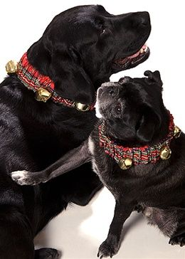 Jingle Bell Collar for Dogs