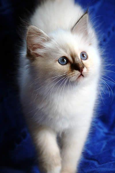 What a beautiful cat !