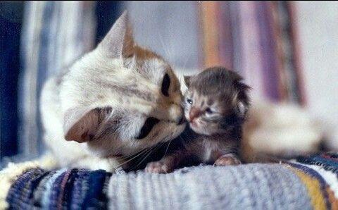 Baby cat & mum. Cat
