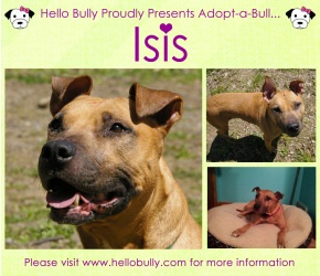 Isis is an adoptable Pit Bull Terrier Dog in Pittsburgh, PA. Earlier this year, we were contacted about a Pit Bull in need. Isis had a home, her owner Dave was battling cancer and living in a home hos...