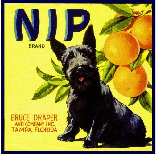 Tampa Florida Nip Scottish Terrier Orange crate label