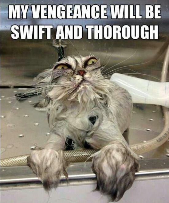 Revenge - Funny #funny cats #avatar funny photos #funny ass photos #wtf fun facts